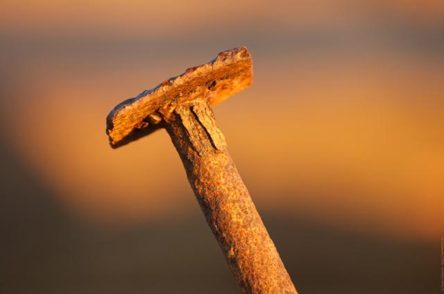 Nail in morning light