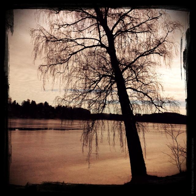@ Pedro Hansson - Joshua Tree - Ulriksdal Solna