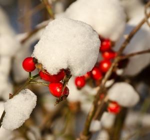 ©Pedro Hansson - Snow in early December - Nikon D7000