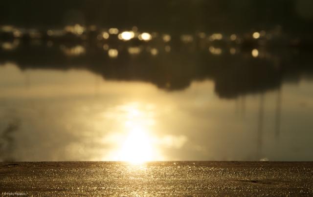 © Pedro Hansson - Golden Morning
