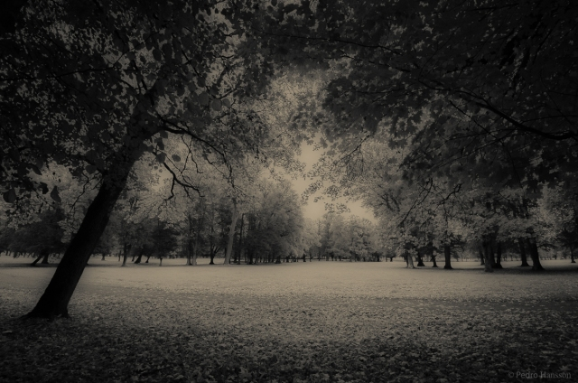 © Pedro Hansson - Infrared Autumn, Structures rather than colors