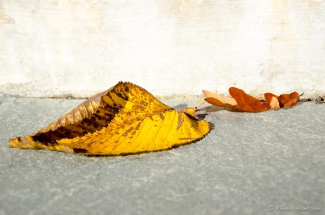 © Pedro Hansson - Ljusterö - Autumn