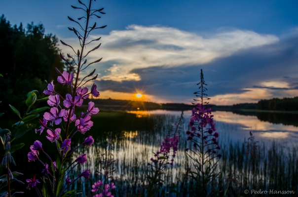 © Pedro Hansson - Summer In Sweden 2014 - Midnight Sun Norrbotten